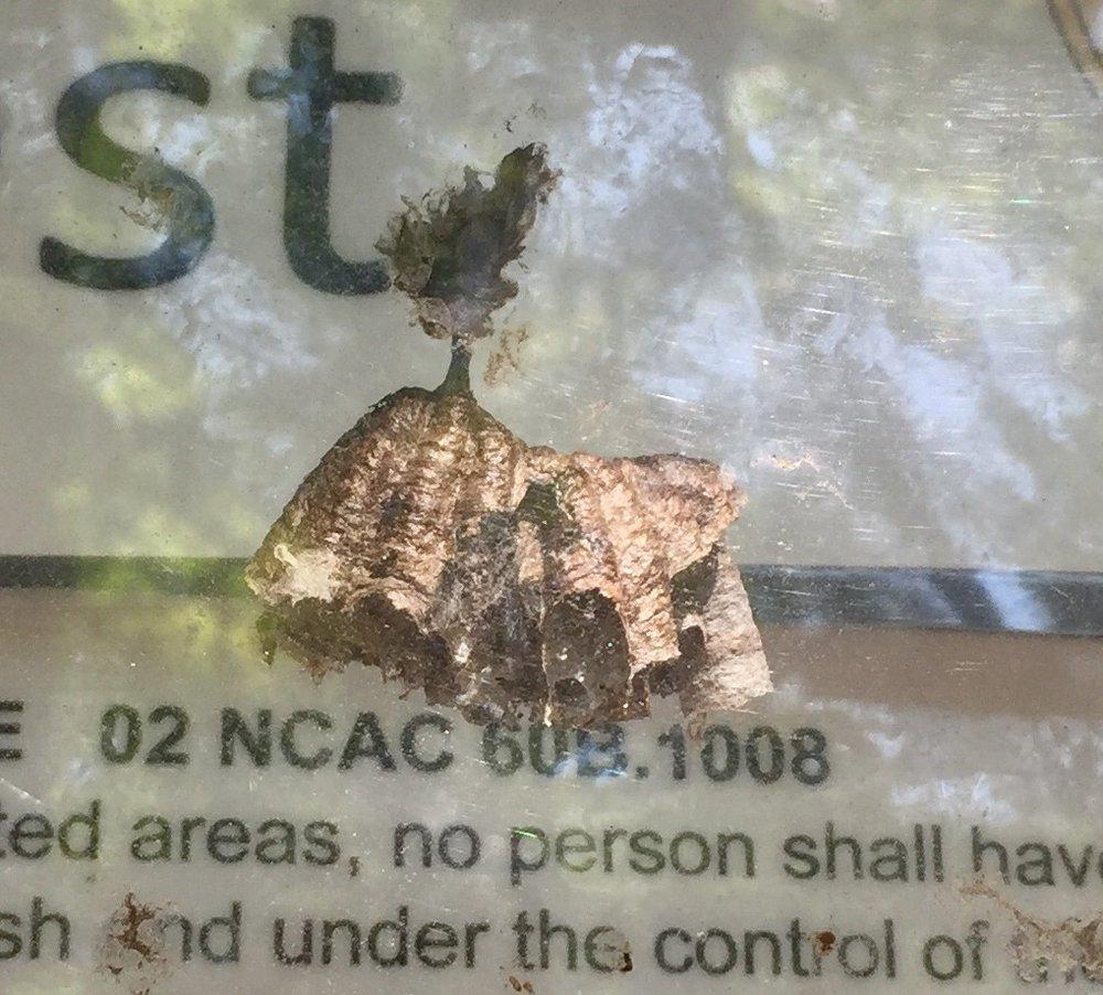 11. Wasp nest.jpg