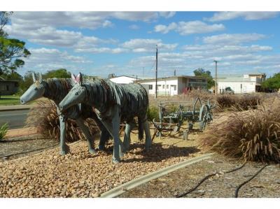 Orroroo Stock Horses