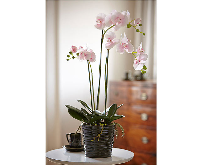 Orchid £69- Bloom