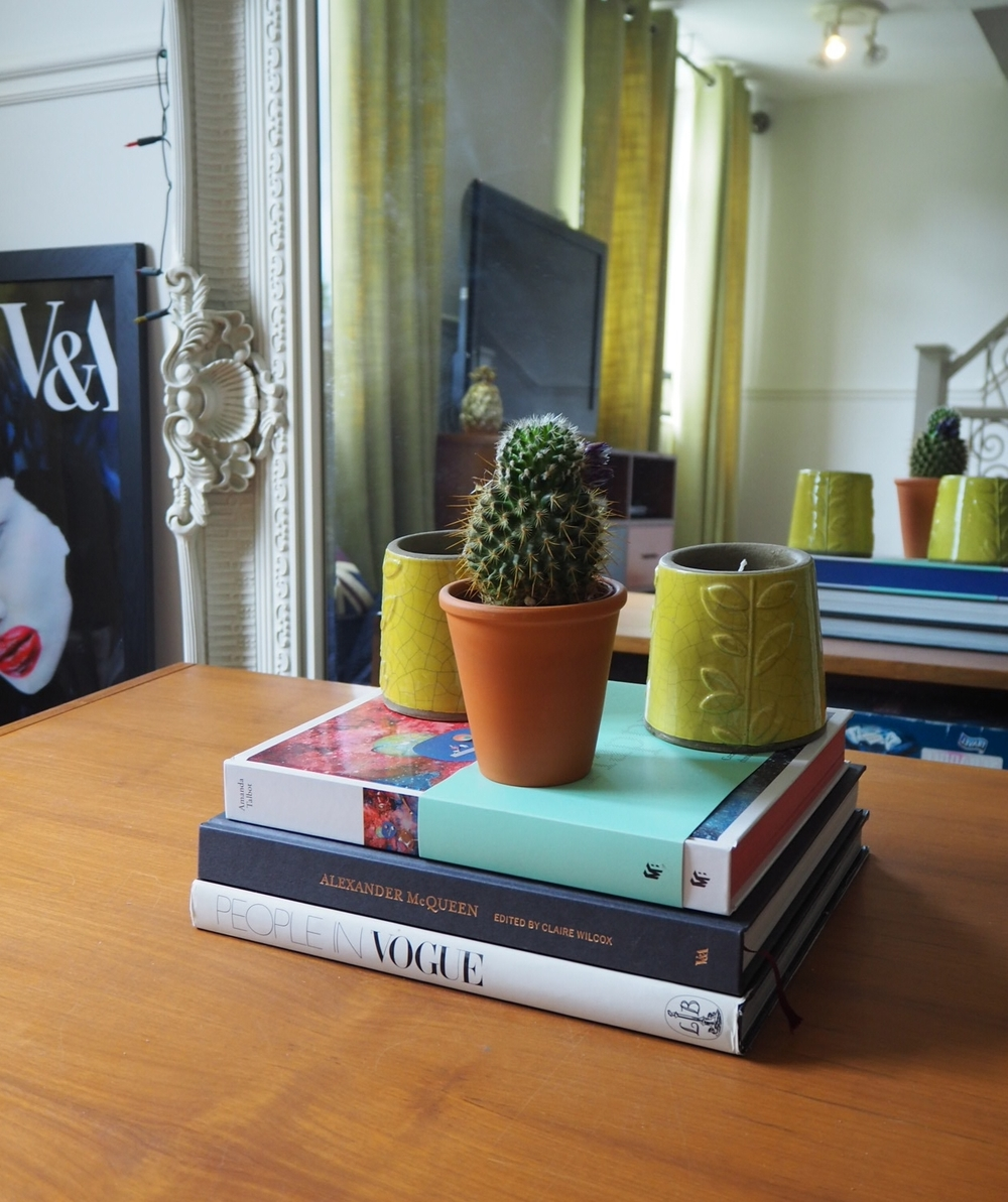 Cactus collection in the lounge