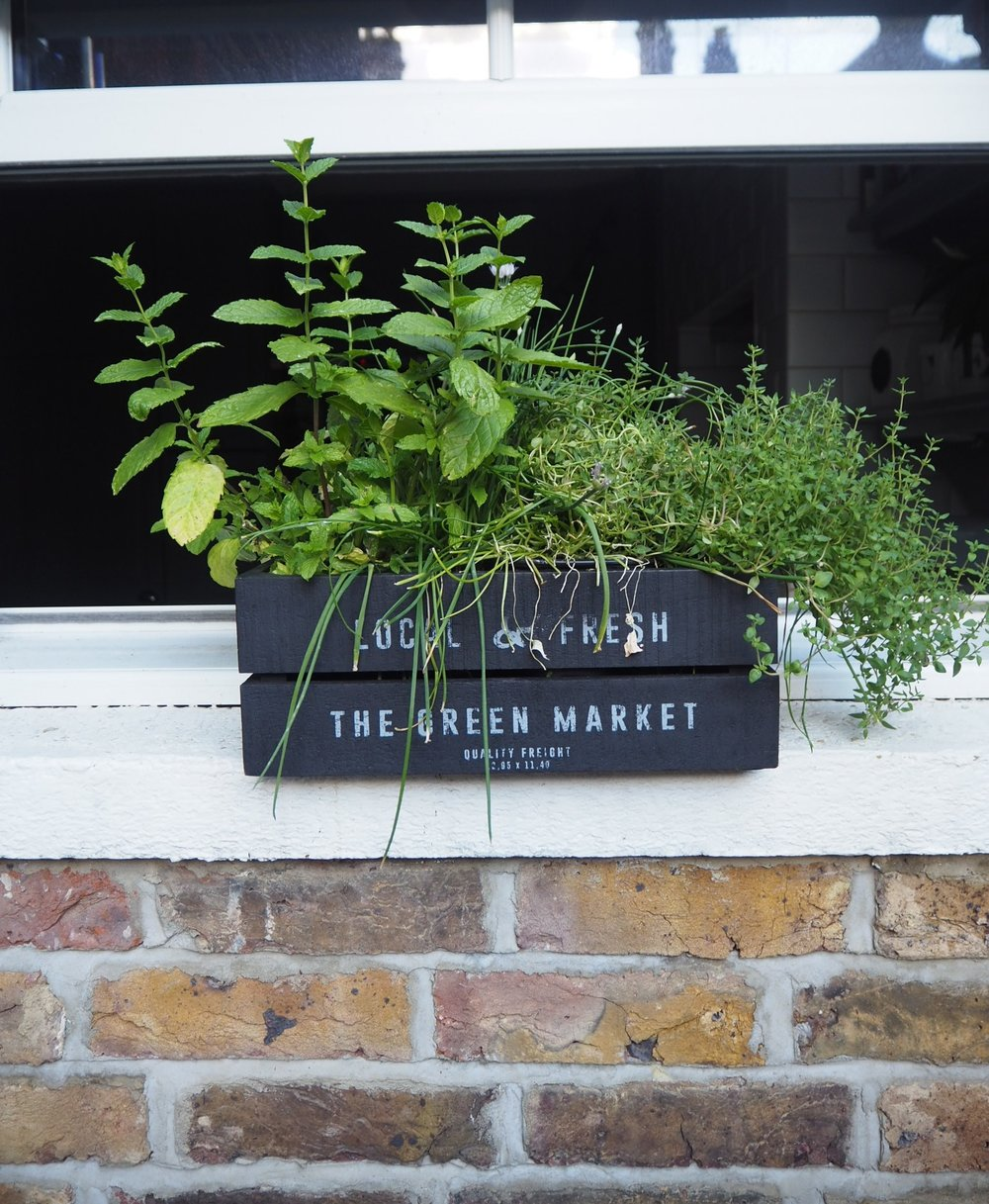 The essential herb garden window box