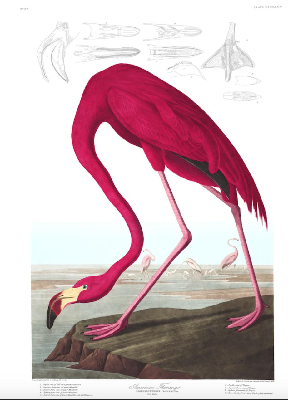 Bird- Flamingo £24
