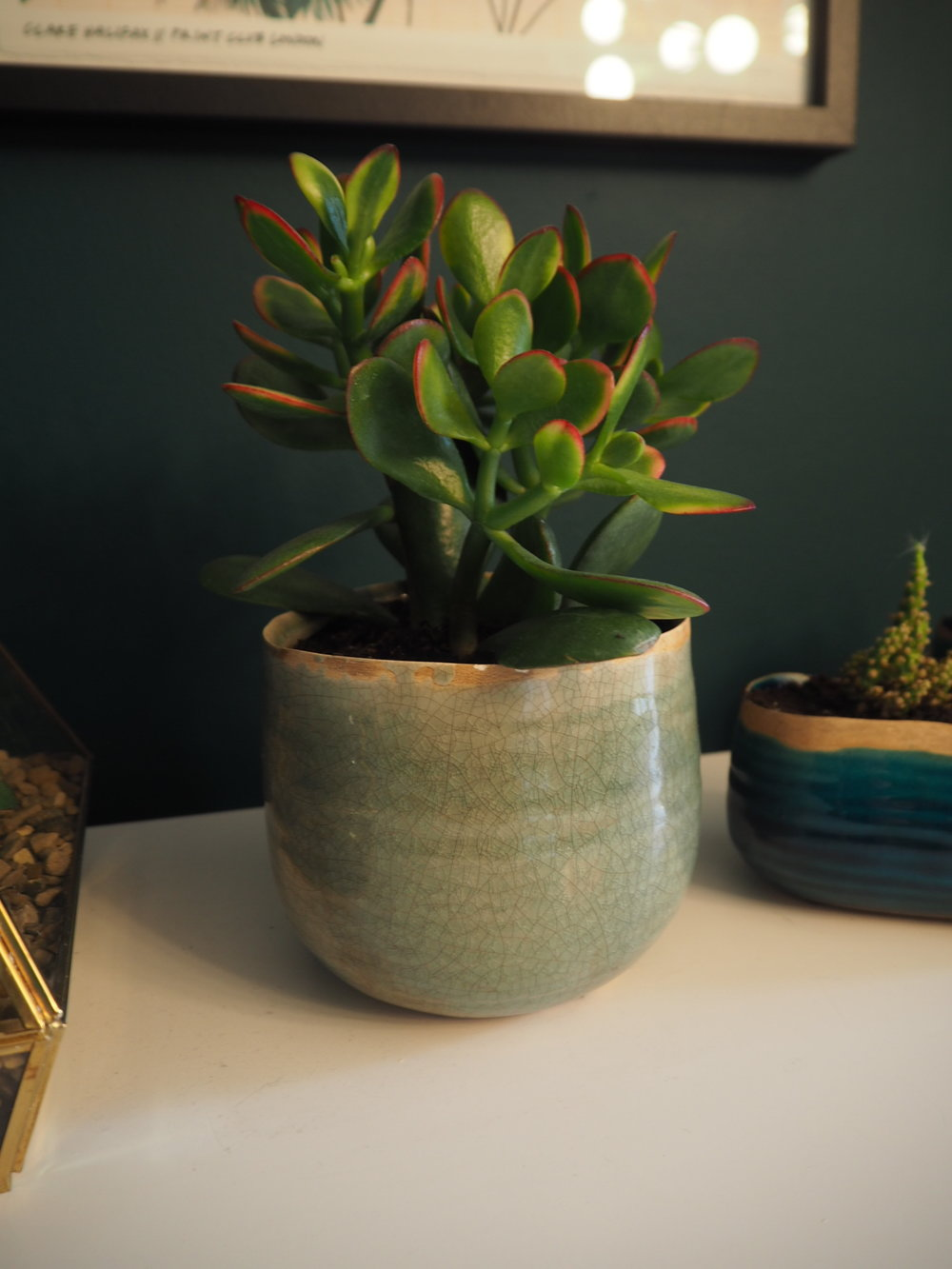 Plant pot from Wayfair/ ivyline