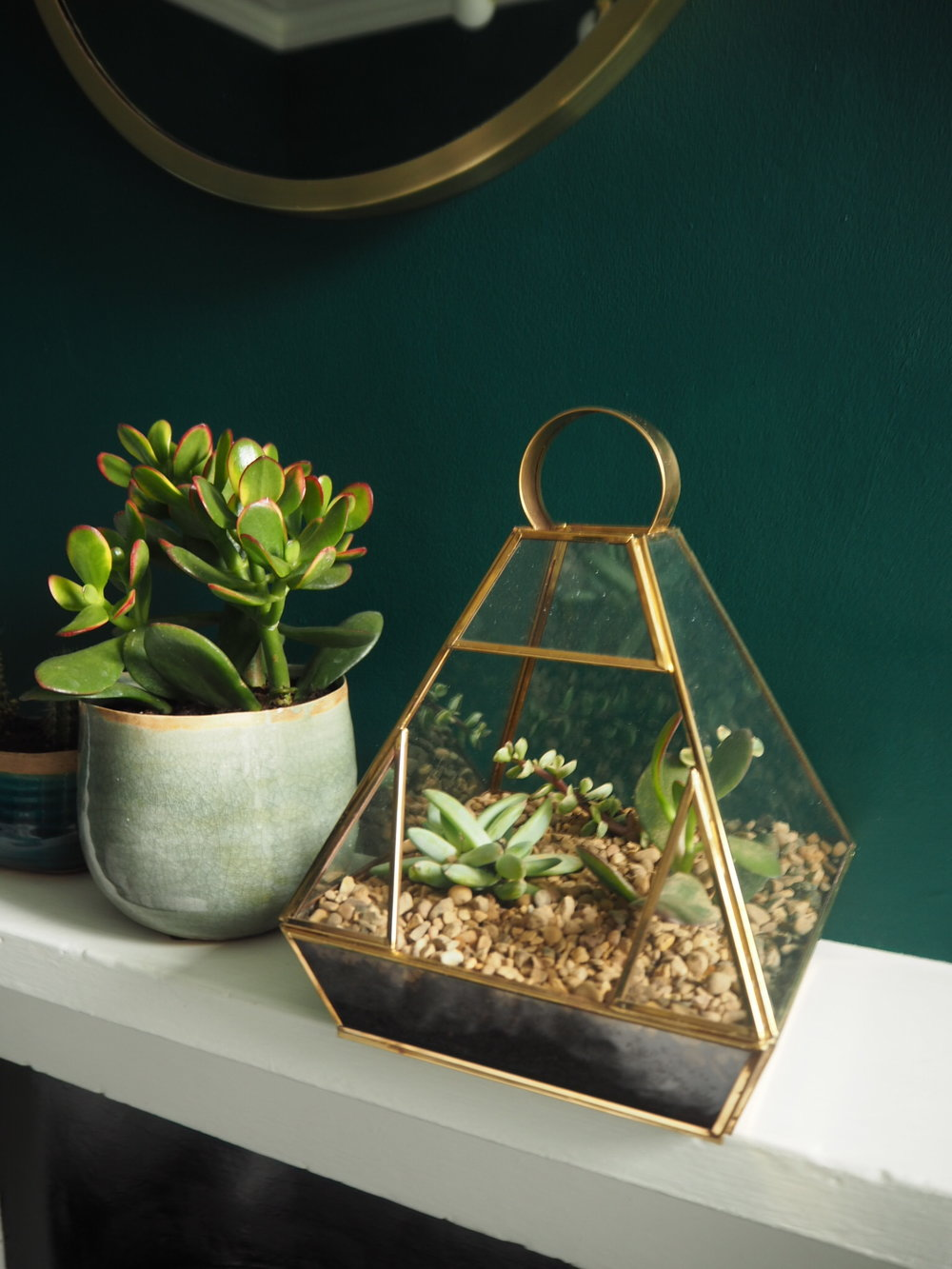 Yuan Terrarium from wayfair