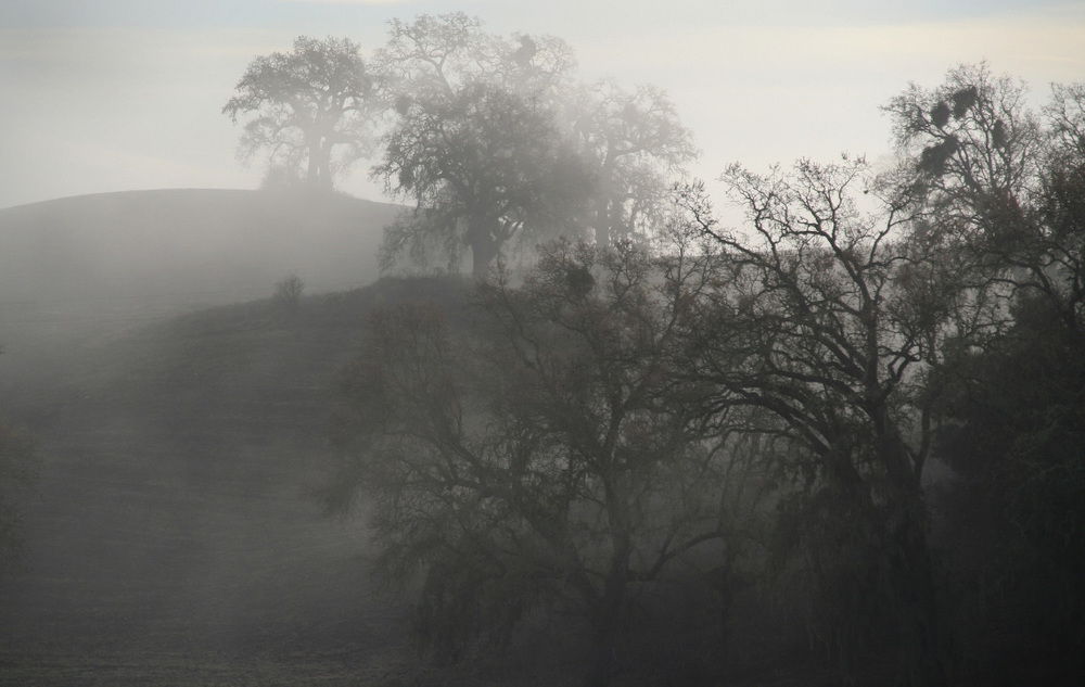 Oso-Libre-Fog.jpg