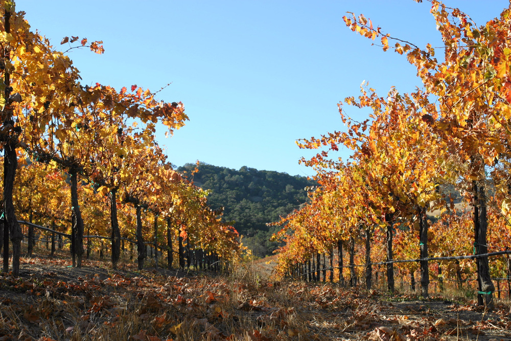 Oso-Libre-Vineyard.jpg