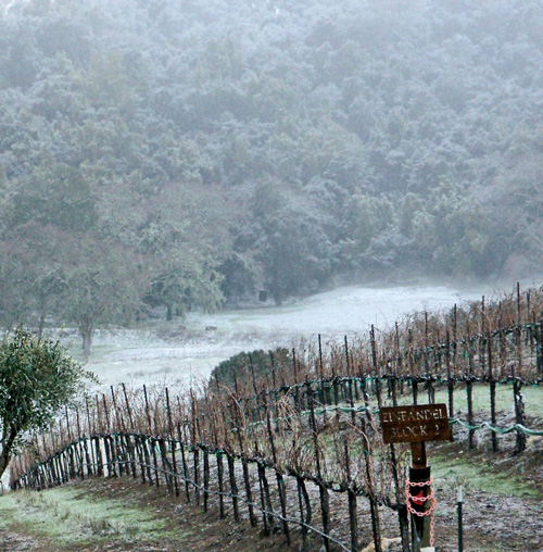 snow-day-2011.jpg