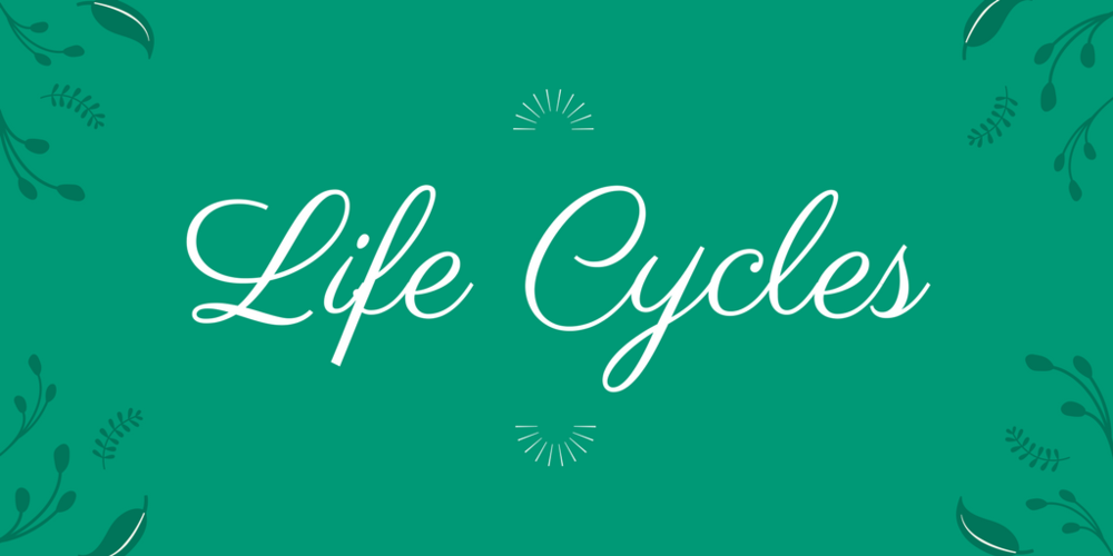 3-LS1-1   Students will learn that life cycles of both a plant and a frog have birth, reproduction, and death in common. Students will identify stages of a life cycle and read an article and answer question about life cycles.