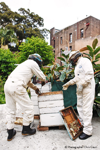 Urban Hives Beekeeping In The Inner City