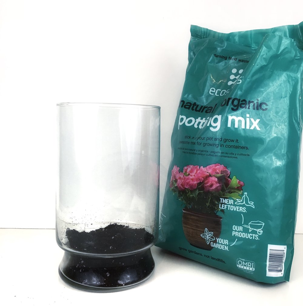 Fill the bottom of your container with soil to create the foundation of your terrarium.