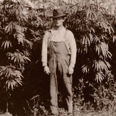 Learn the history of marijuana.