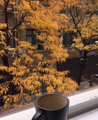 I took these  beautiful shots over my morning cuppa in NYC, Greenwich Village, November, 2016