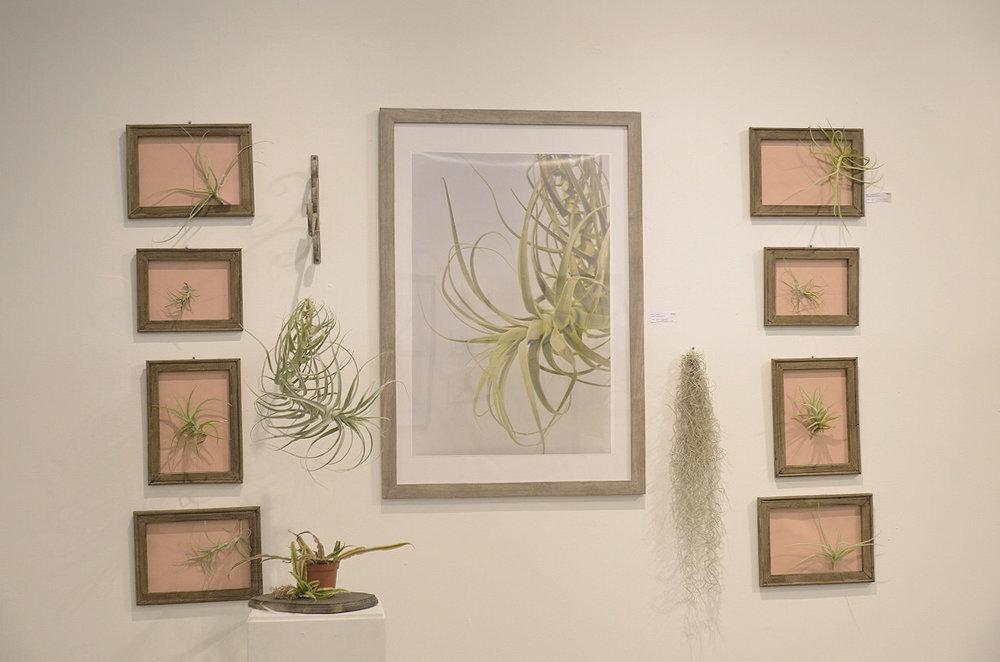 studio plants 1.jpg