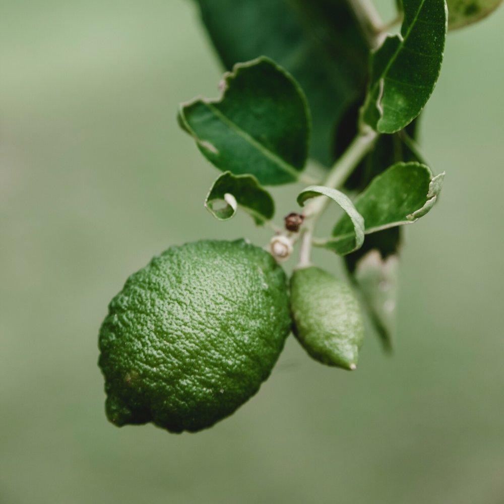 citrus lime.JPG