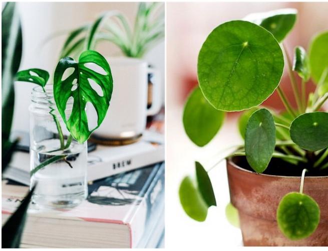 plant swap blog.JPG