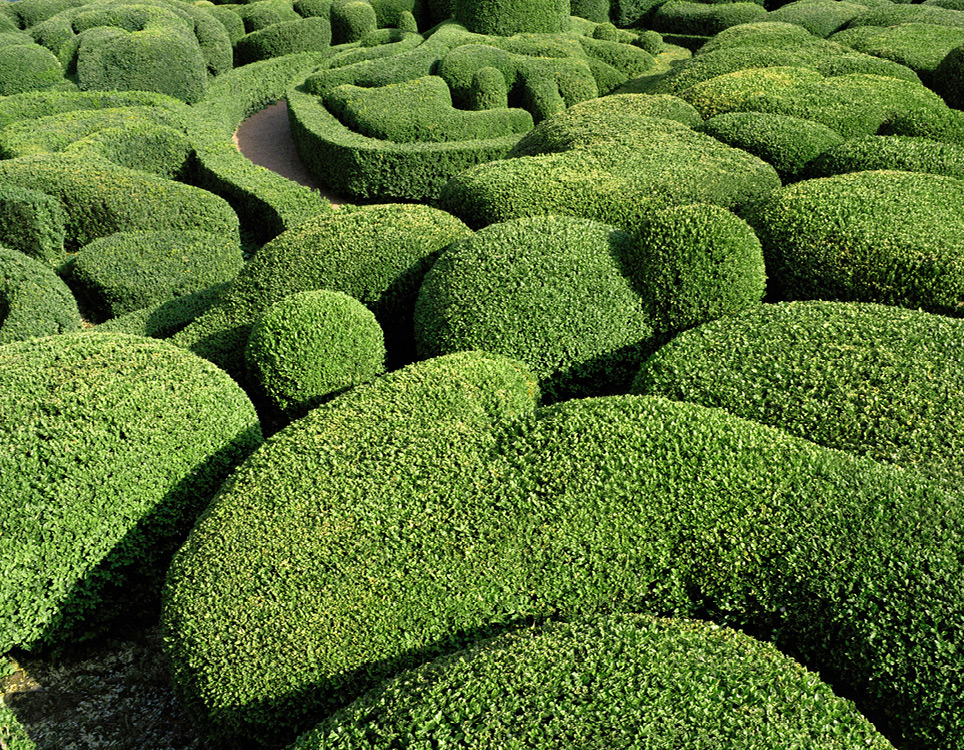 topiary-8.jpg