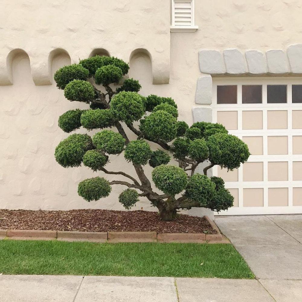 iGNANT_Photography_Kelsey_McClellan_San_Francisco_Trees_10.jpg