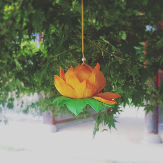 Lotus flower protected by a tree in a rainy day. We all want someone around to care for us. #temple #lotusflower #wtitersofinstagram #care