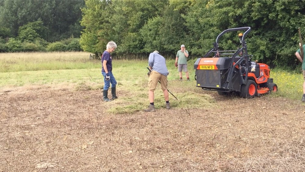 Spreading the green hay cut from the meadow (background) in early August