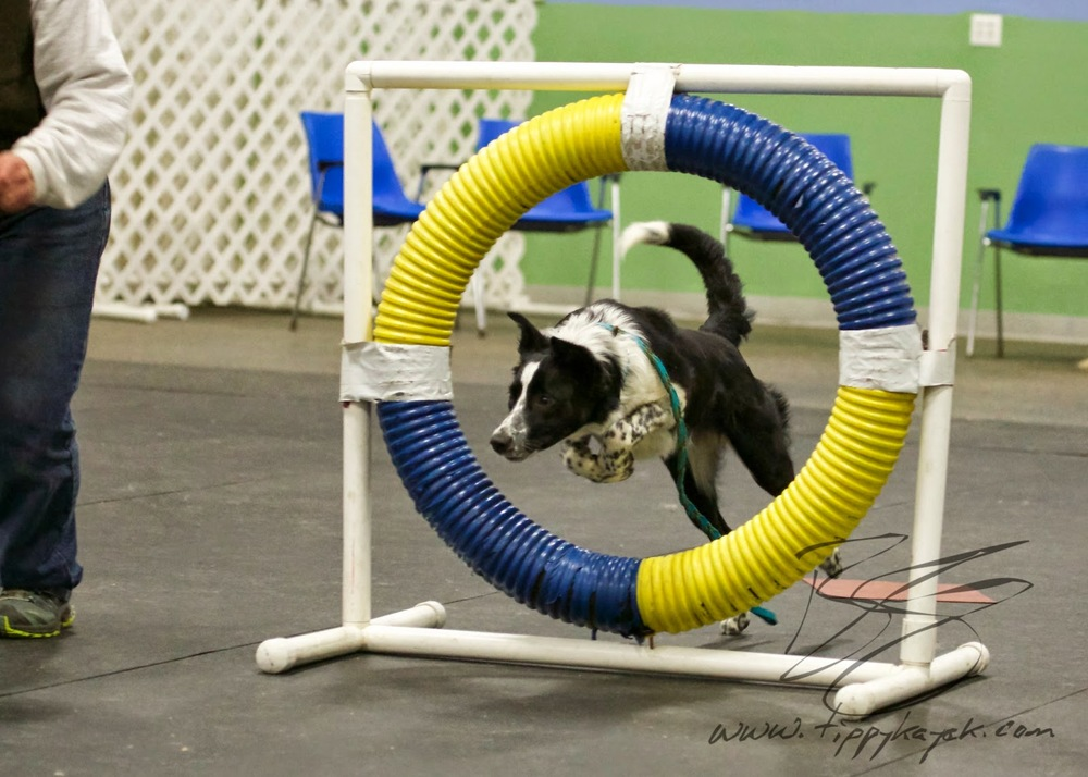 If you can train an intense herding dog to literally jump through hoops without hitting him, you can certainly train a dog through basic obedience without it.