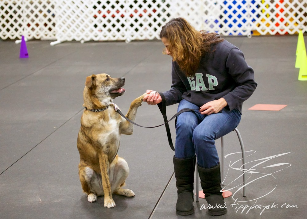 During a Paws N' Effect Family Dog Training Basics class, Roma learns that giving her paw voluntarily is fun.