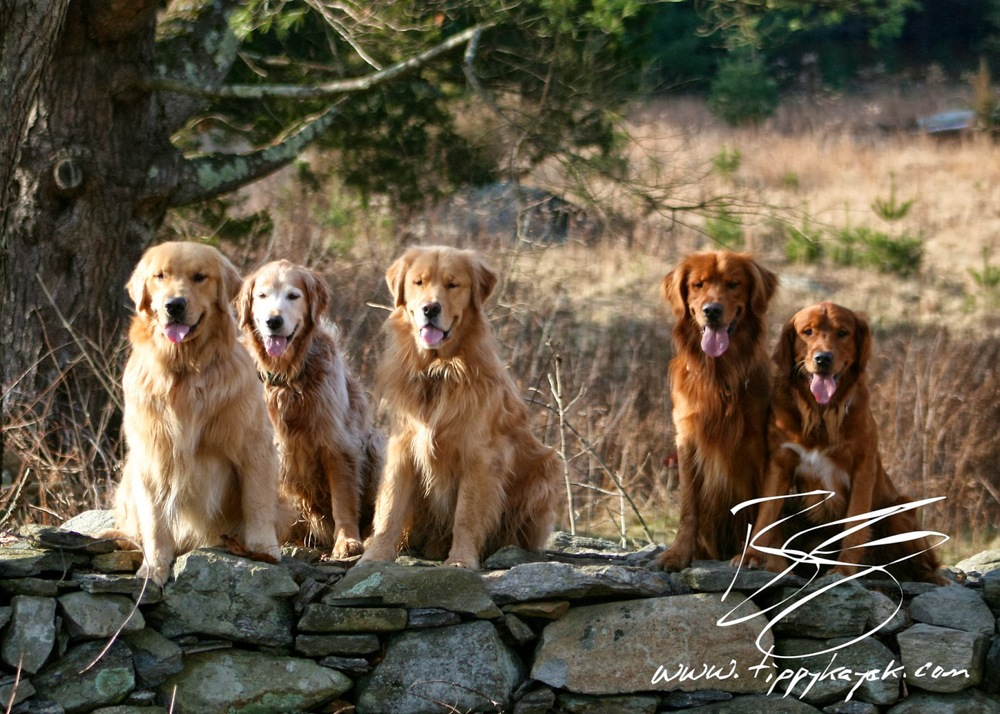 Copley, Finn, Tally, Comet, and Jax practice the daily stay in 2010.