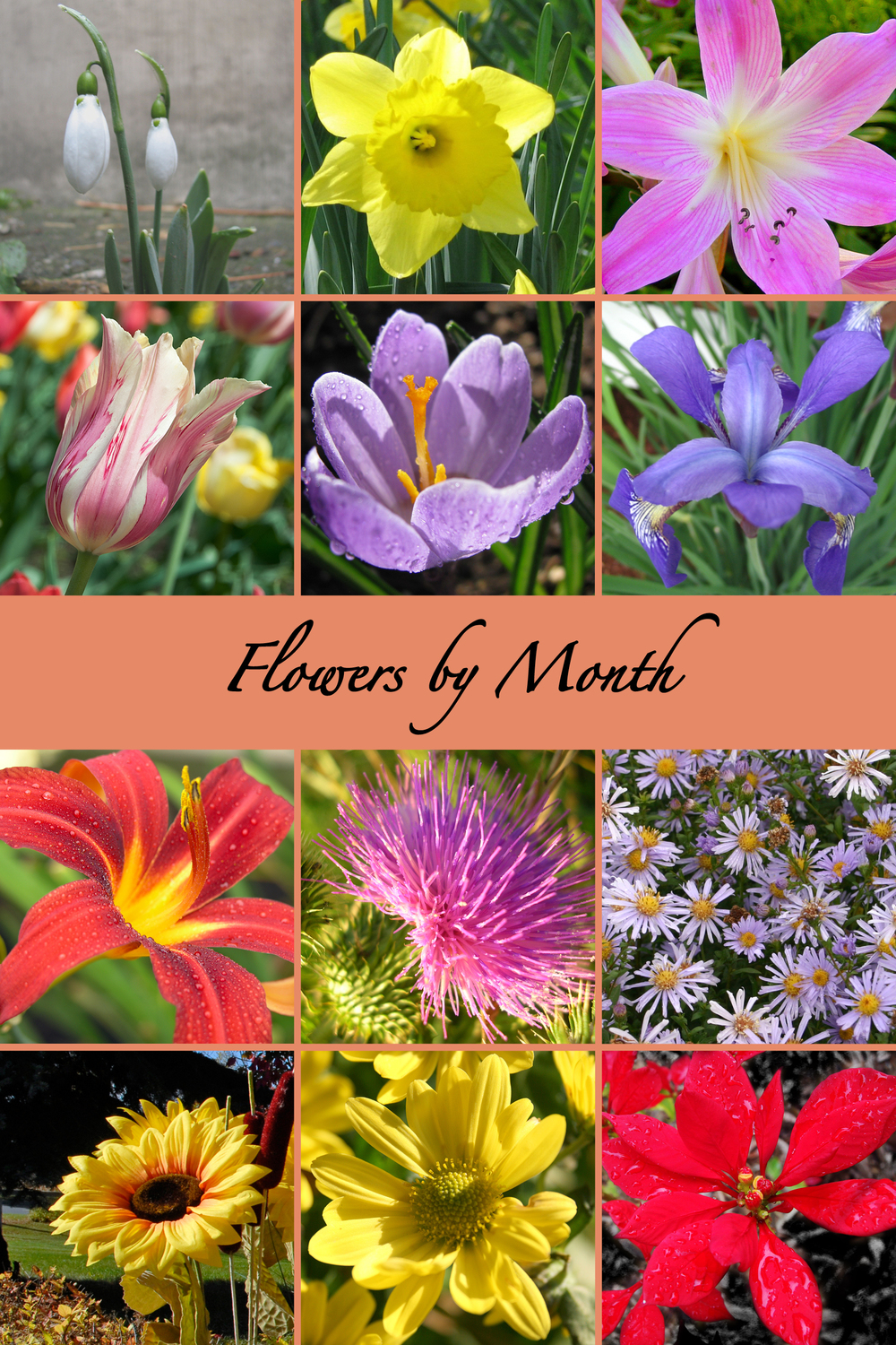 Flowers by Month