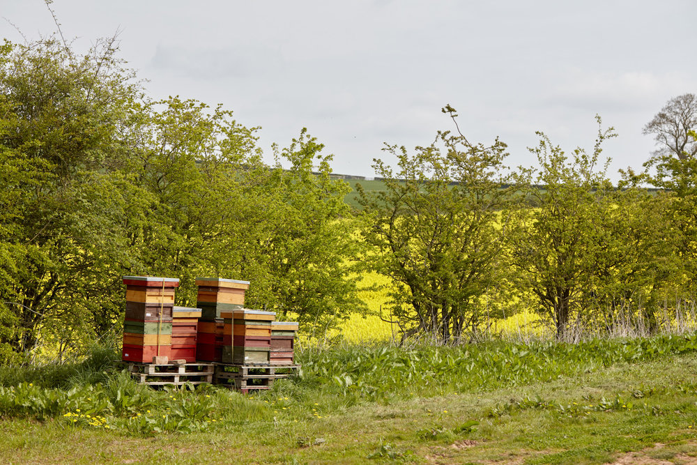 WW_CHERRY_BLOSSOM_HIVES_004.jpg