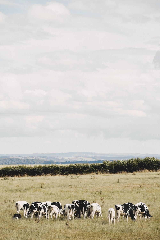 AGRICENTRE_QUANTOCK_FARM_108.jpg
