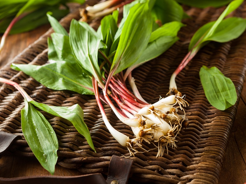 Fresh Ramps featured in the pasta course.  - .