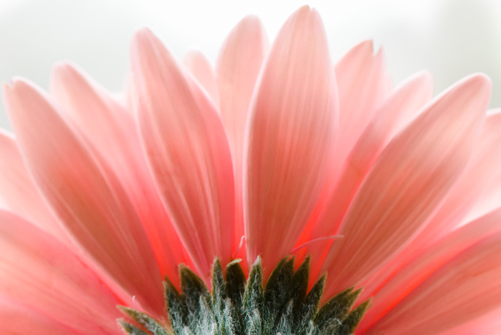 flowerrev (1 of 2).jpg