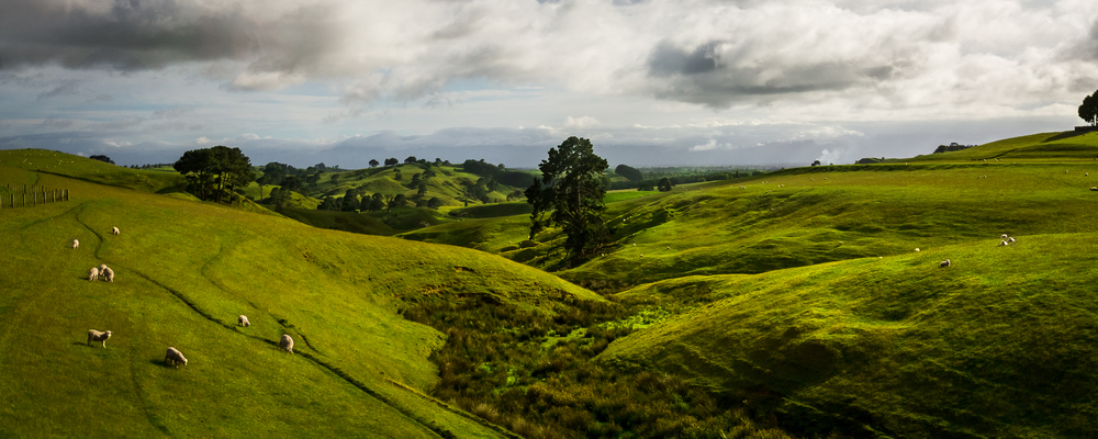 Neuseeland Dez klein 2015-15.JPG