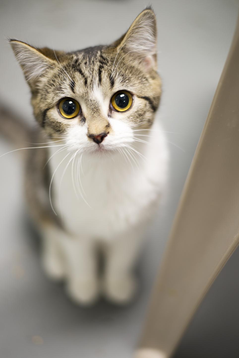 furkids-kittie-01-web.jpg