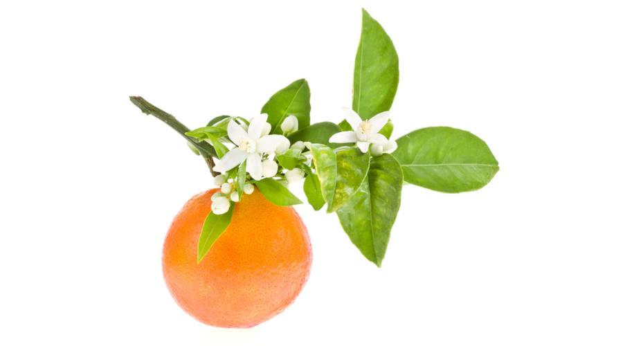 aromatherapy biophilic lifestyle organic health design fitness