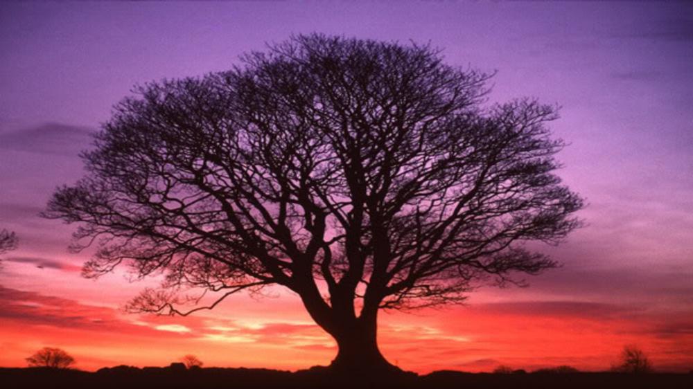 beautiful-tree.jpg