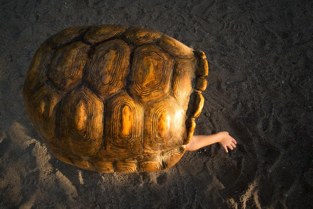 turtleshell_web.jpg