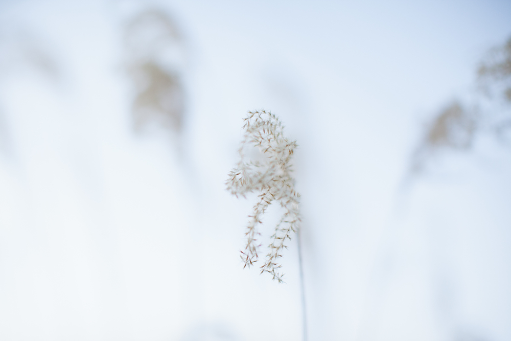 wintergrass_web.jpg
