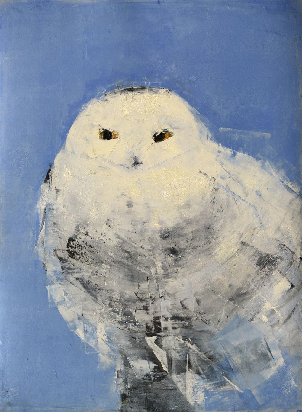 Snowy Owl (on Blue)