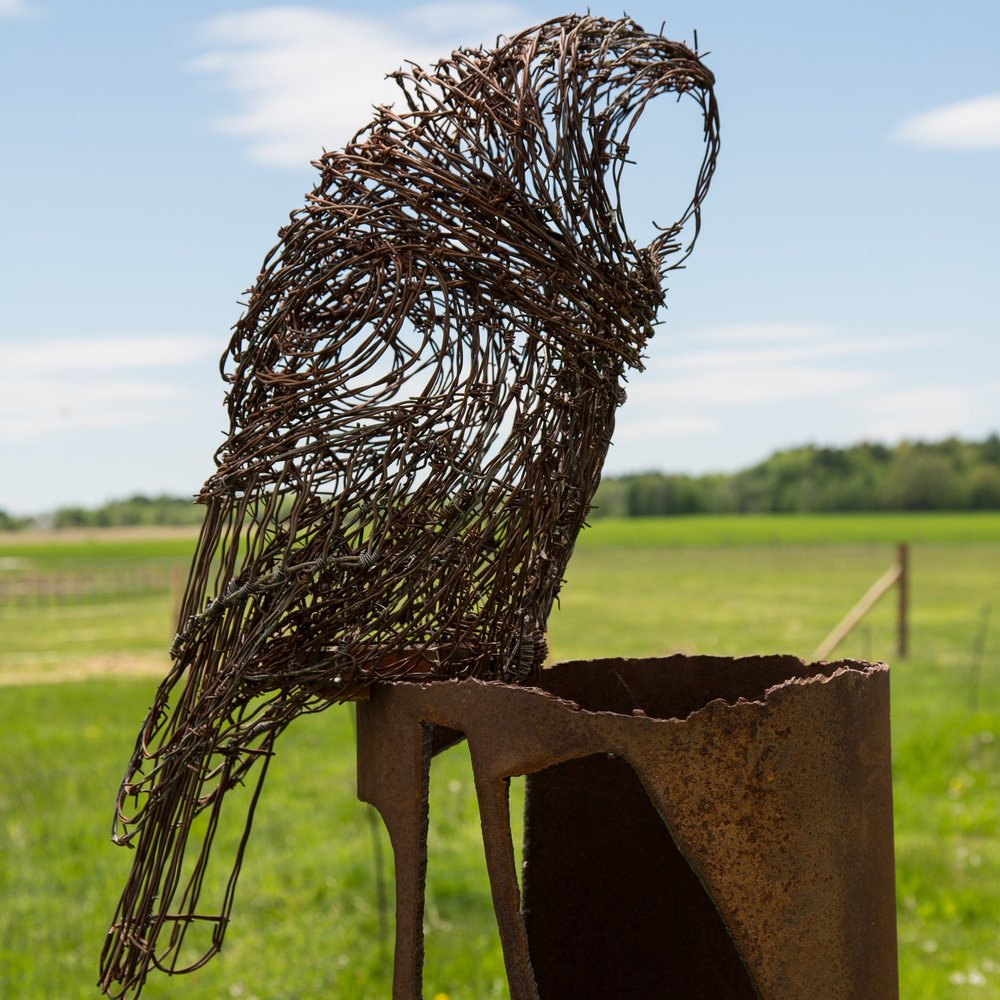 Barb Wire Owl #5