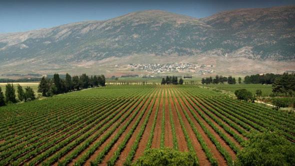 Mediterranean Wine from the vineyards of Lebanon, served at ILILI Restaurant