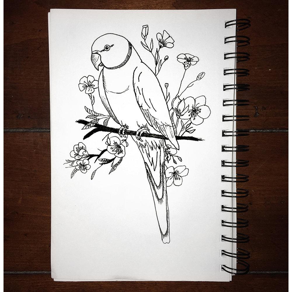 cel-bird.jpg
