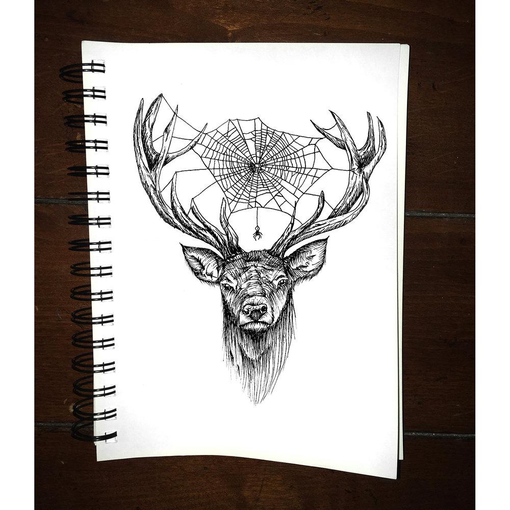 deer-spider.jpg