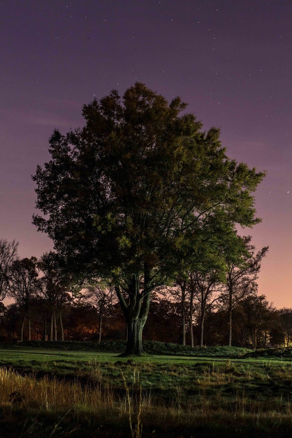 Tree at Night.jpg
