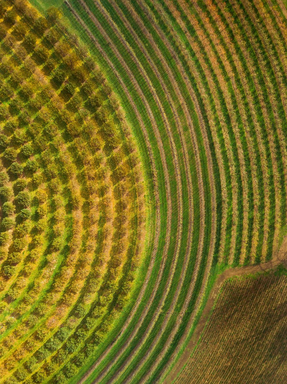 farmpatterncircle_typoland_aerial-1.jpg
