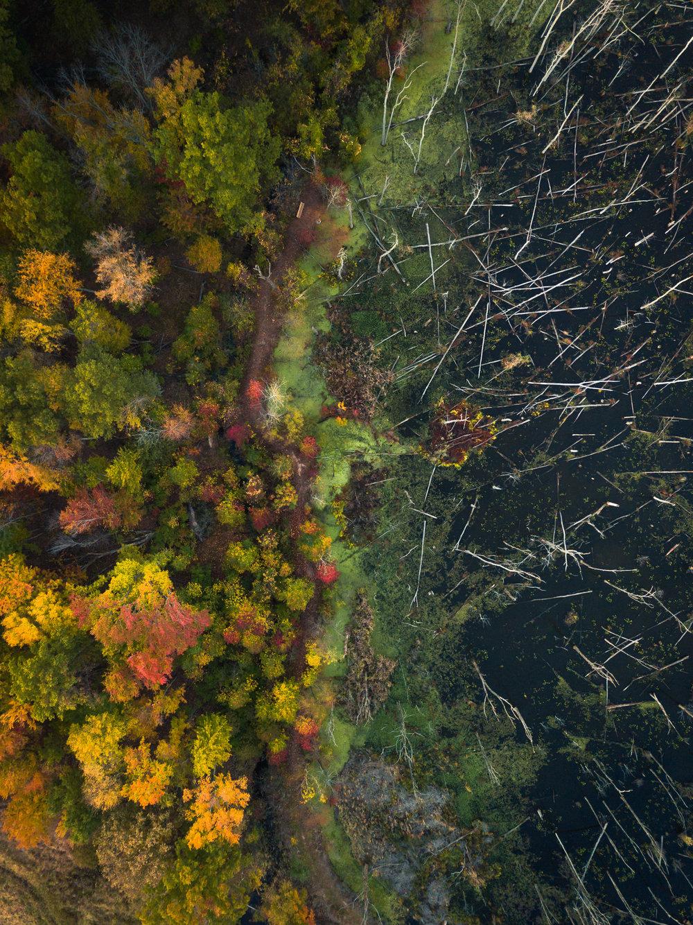 treesdown_typoland_aerial-1.jpg