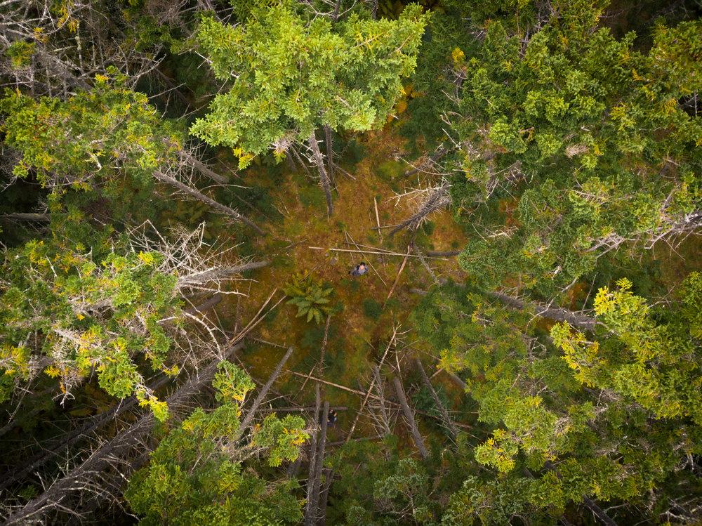 cobytrees_typoland_aerial.jpg