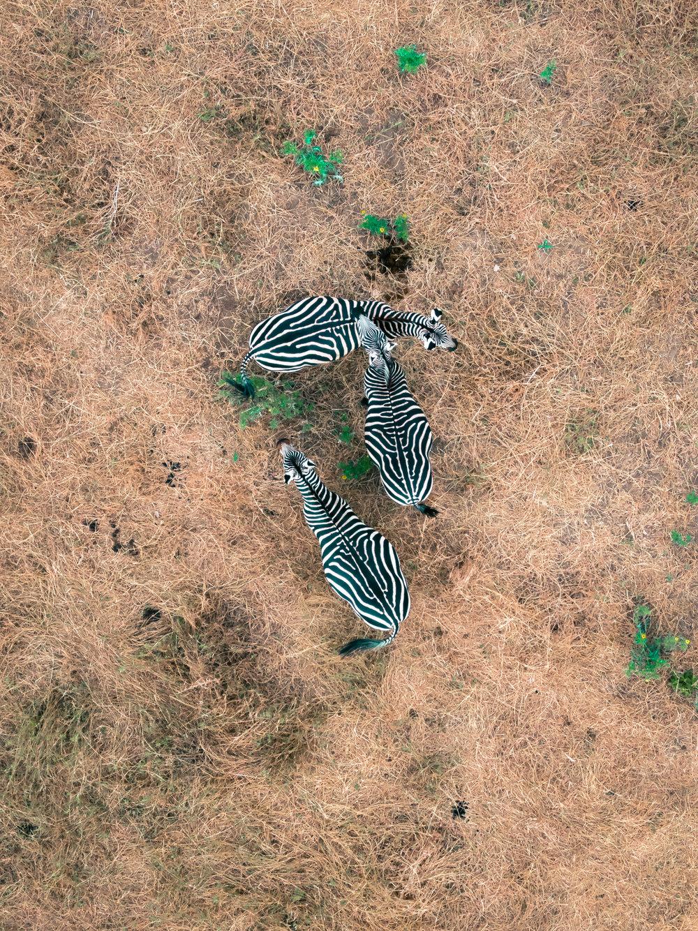 Zebra_typoland_aerial.jpg
