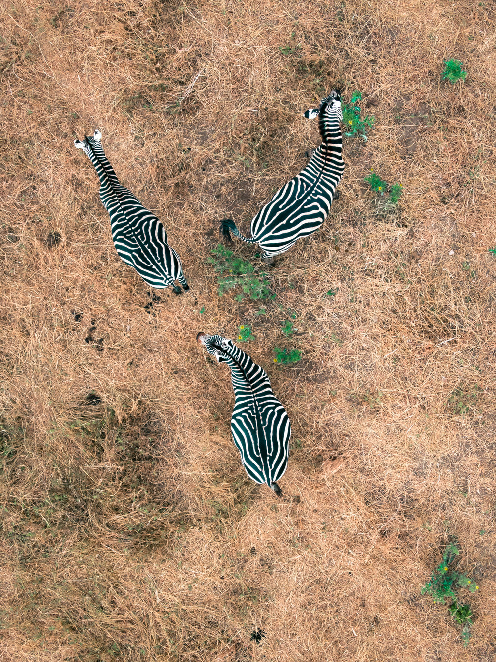 zbrayY_typoland_aerial.jpg