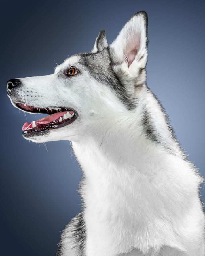 dogs-468-Edit.jpg