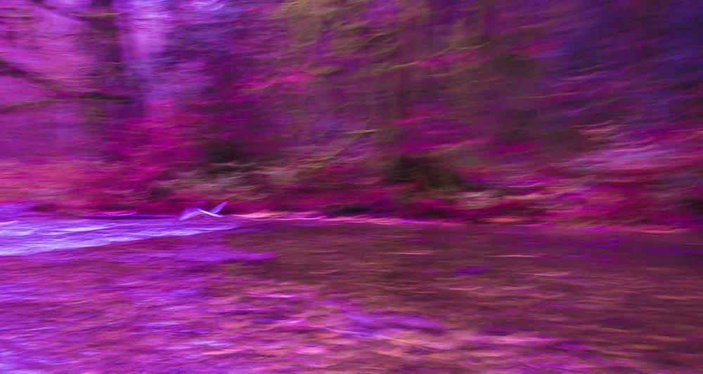 Goldstream Park-6910.jpg